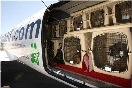 перевозка животных в багажном отсеке самолета