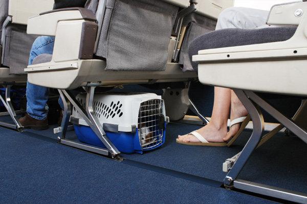 размещение животных в салоне самолета