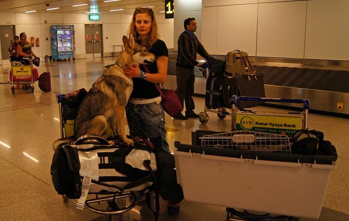 с собакой в аэропорту