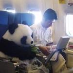 Самолетом с животными в Польшу