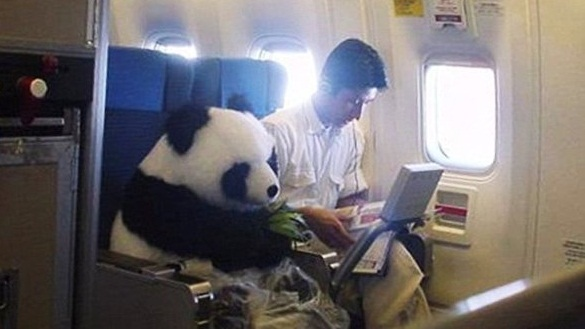 самолетом с животными