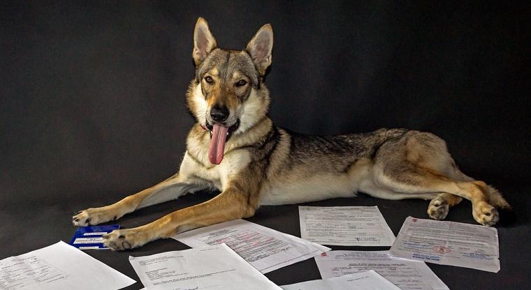 собака с документами на пересечение границы