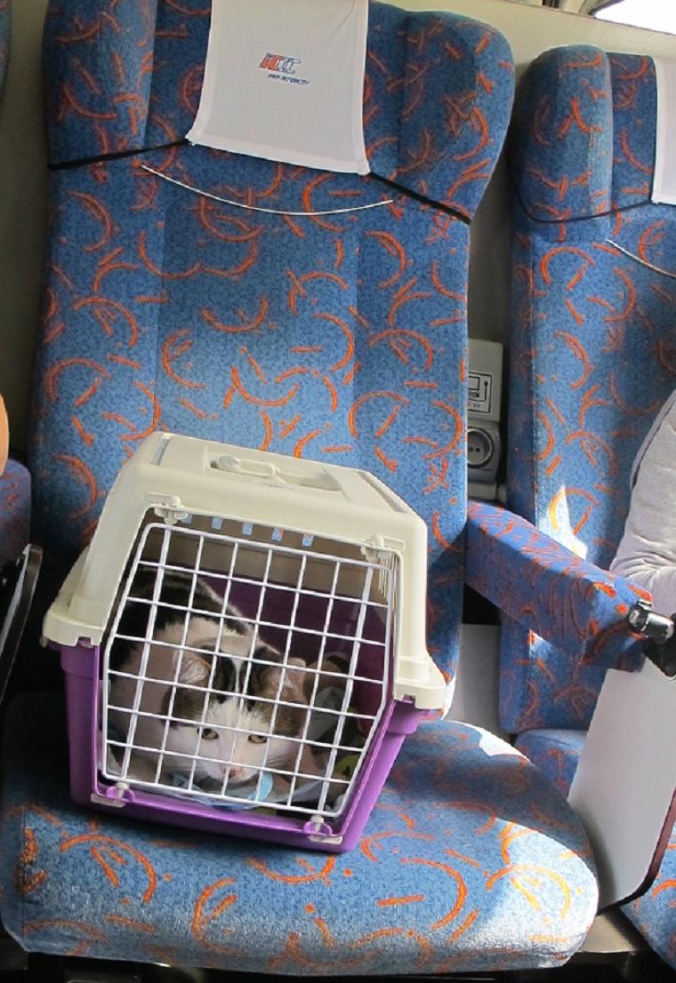 кот в поезде интерсити