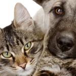 Как подготовиться к путешествию с домашним животным в Польшу и другие страны Европы