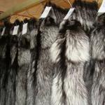 шкурки чернобурой лисы